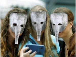 g- elephants