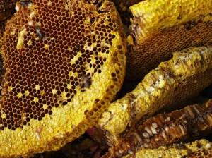 1-abeilles