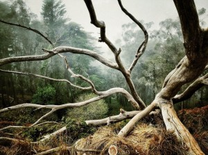 arbre mort