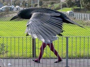 Crow flies in front of woman giving appearance of a bird with legs, Aberdeen, Scotland - 30 Sep 2014