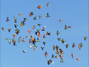TOPSHOTS-SPAIN-PIGEON BREEDING-COMPETITION
